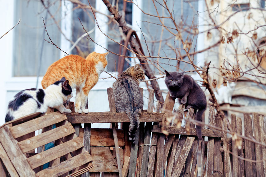 Feral cats perching on a fence