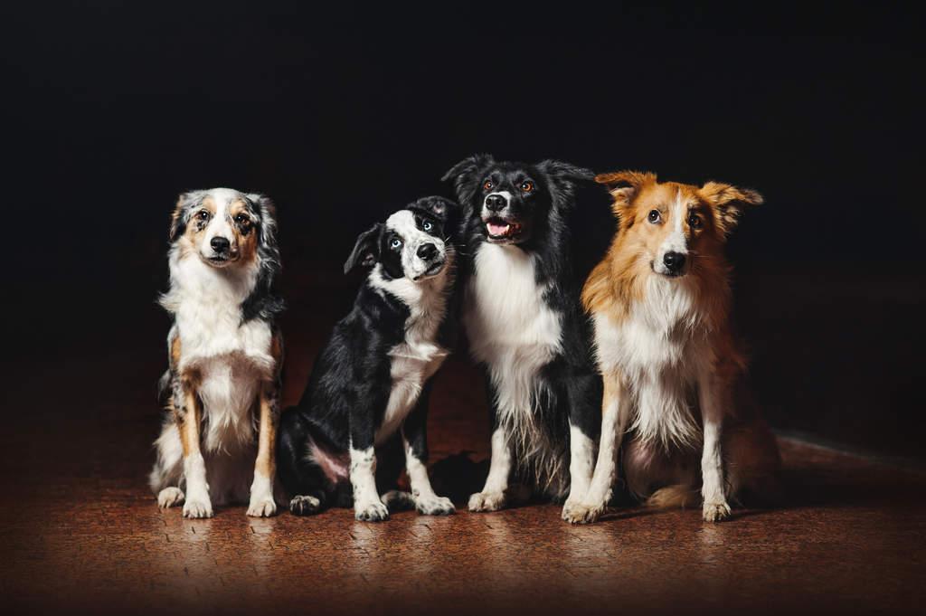 Saluki Dog Coats Uk