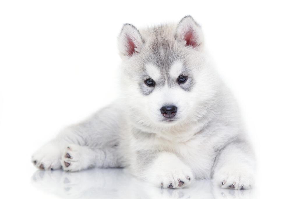 Gentle Dog Breeds Uk