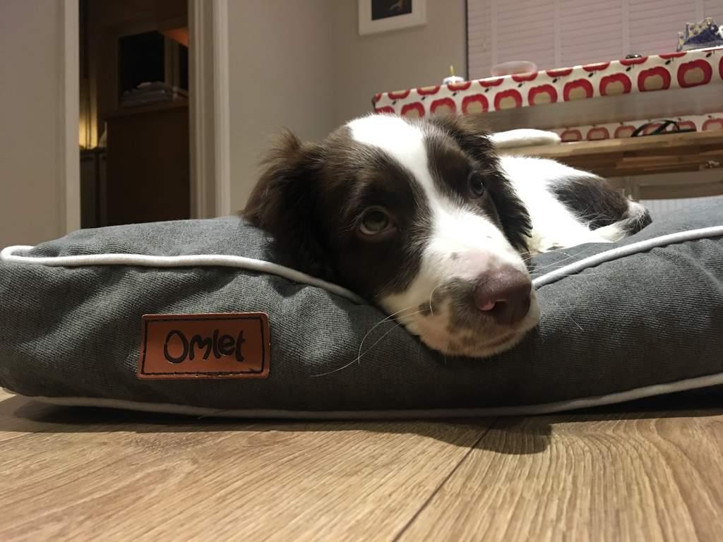Fido Studio 24 Dog Bed Grey This Week S Favourites Staff Picks