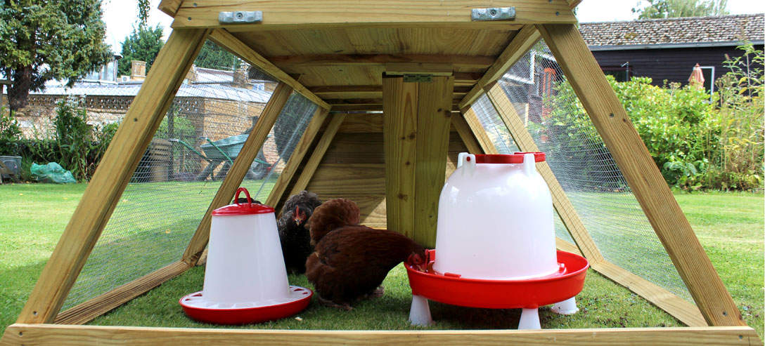 Below the sleeping area is a spacious area for hens to roam around