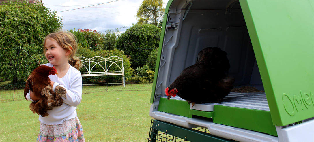 Thanks to the user friendly design of the Eglu Go Up access to the hen house is really simple