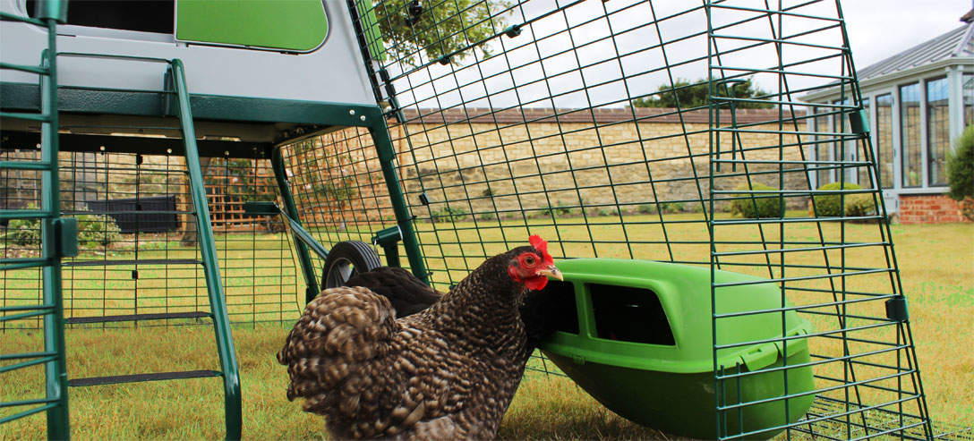 Durable plastic feeders and waterers are included with the Eglu Go Up chicken tractor