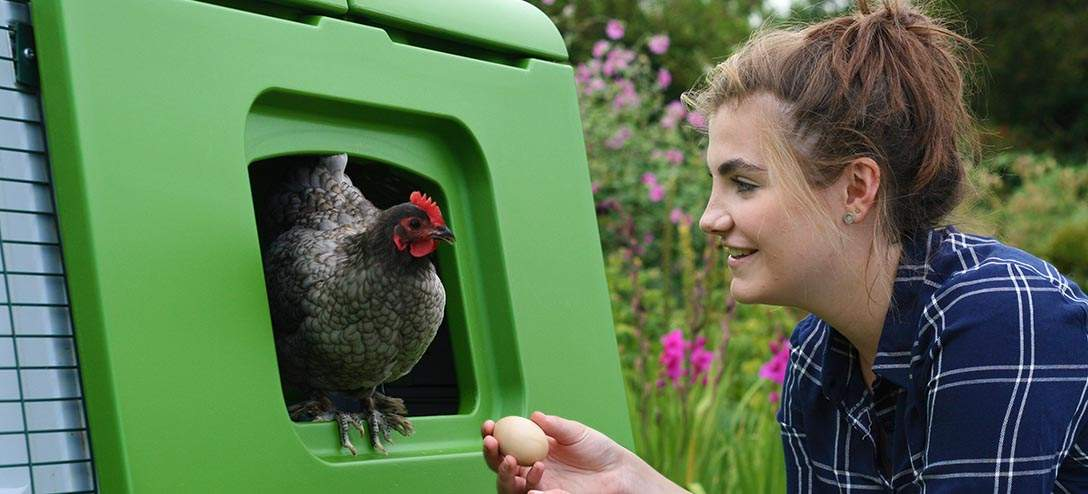 Collecting eggs from your chicken coop is a daily delight!