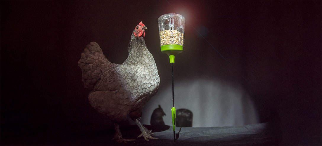 Vos poules adoreront tellement leur Jouet à Picorer Elvis qu'elles se mettront à chanter !