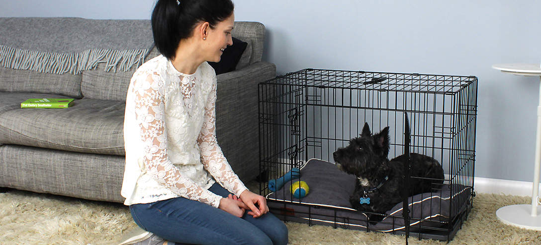 The Omlet Fido Classic is a great way to help train a puppy.