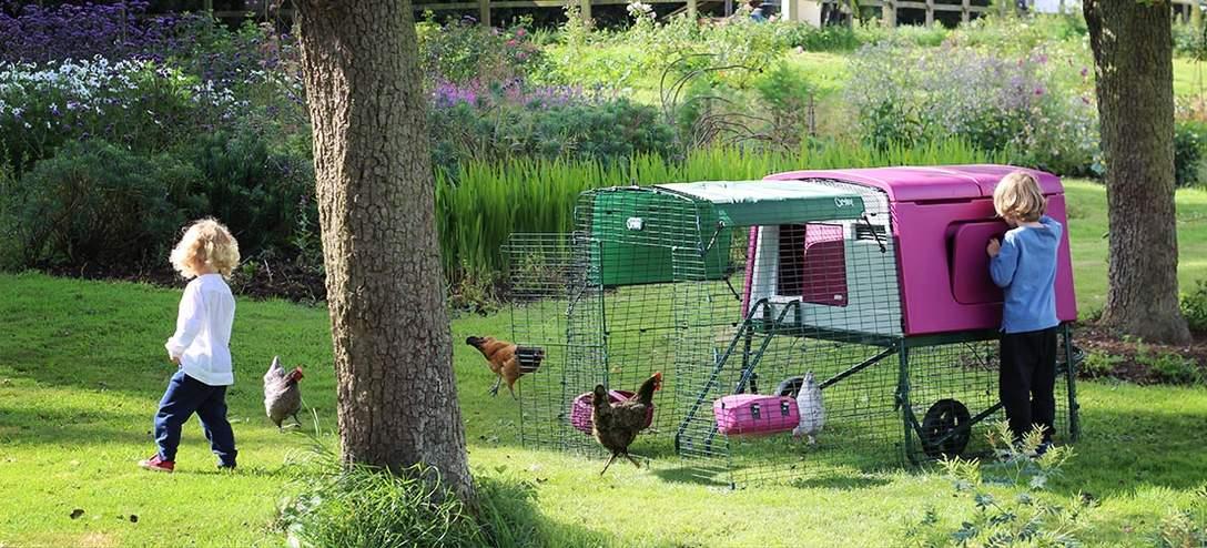Lilla Eglu Cube med 2 meter hønsegård i en blomsterhave