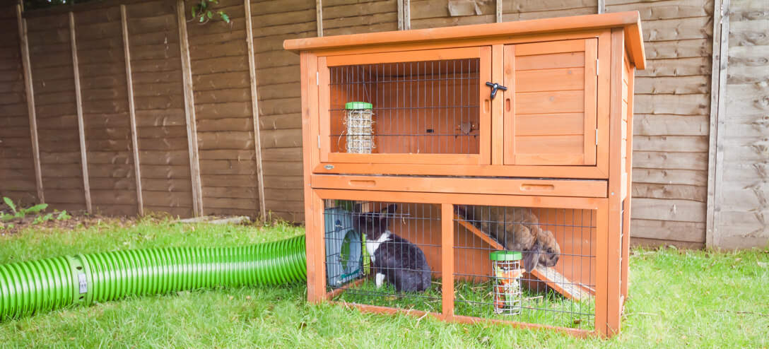 The design of the Caddi is suitable for nearly all types of food. Increasing your rabbits' dietary variety can help to improve their general health and vitality