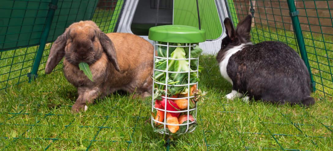 The Caddi Rabbit Treat Holder provides a clean and hygienic way for you to feed your pet rabbits as it keeps their food off of the ground