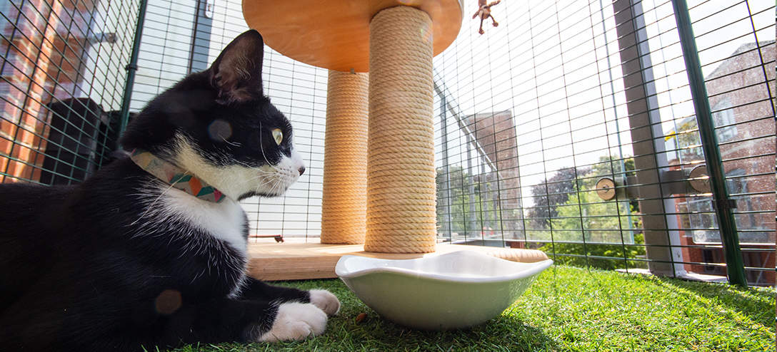 You can furnish your cat proof balcony with scratching posts and interactive cat toys to really enhance your cat's new environment
