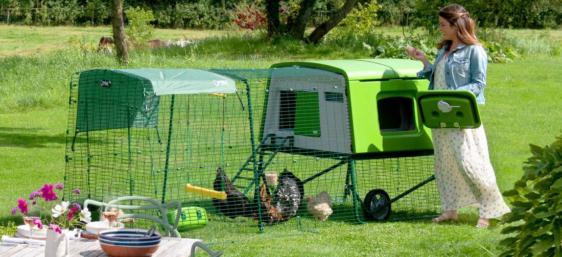 The Eglu Cube coop makes chicken keeping straightforward and fun, perfect for both newbies and advanced hen keepers.