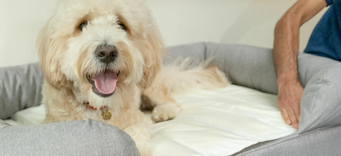 For a luxury nap for your dog, integrate the cooling mat with your dog's bed.