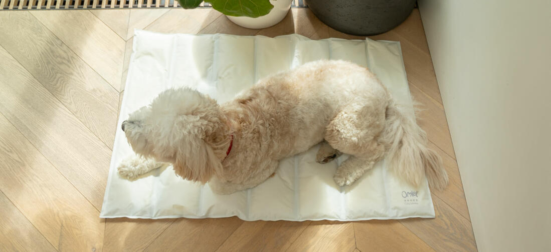 The memory foam offers ultimate comfort, so you can choose if you want to put the mat on your dog's bed or straight on the floor.