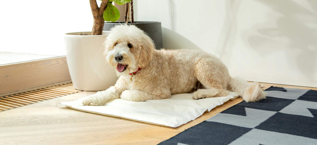 Providing a cool and comfortable spot to rest on, the Omlet Cooling Mat will be your dog's favourite accessory this summer.