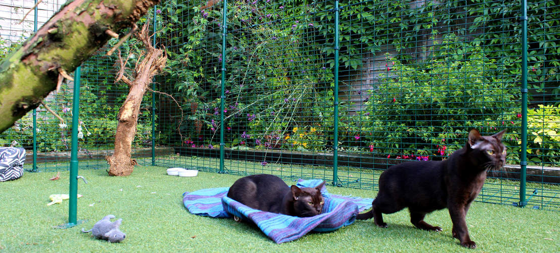 Perfect for owners of pedigree or indoor cats, the Catio Outdoor Cat Enclosure is approved by leading cat breeders from around the world