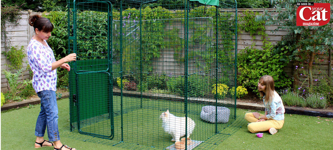 A Ragdoll cat in a 2 x 2 x 2 Outdoor Cat Run, as seen in Your Cat Magazine