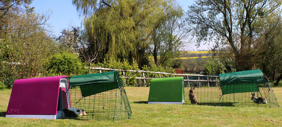 The Eglu Go Guinea Pig Hutch and Eglu Go Rabbit Hutch in the garden