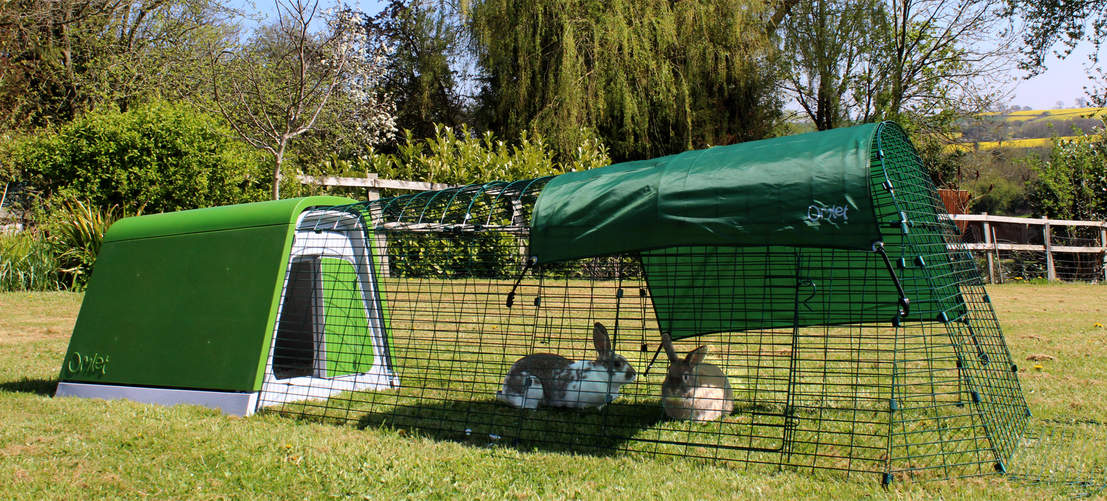 Two rabbits playing in the Eglu Go Rabbit Hutch Run