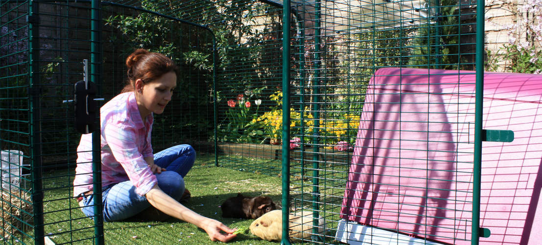 There's plenty of room in the run for you to spend time with your guinea pigs