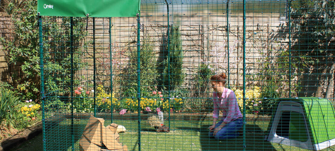 Extend your Outdoor Guinea Pig Run to add even more space for your guinea pigs