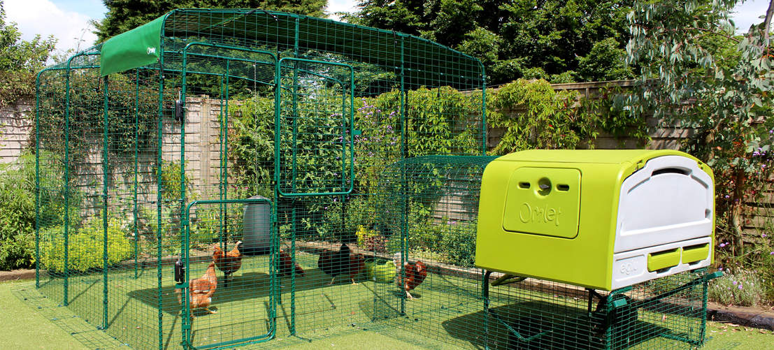 9ft x 9ft x 6ft Walk in Chicken Run attached to Eglu Cube Chicken Coop with Run