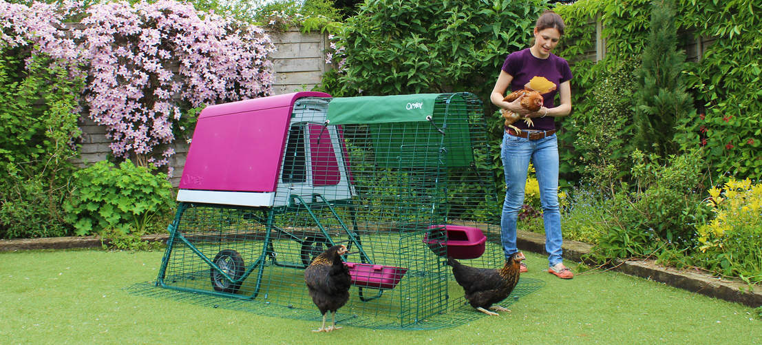 The portable chicken coop features a predator proof run that will look great in your backyard