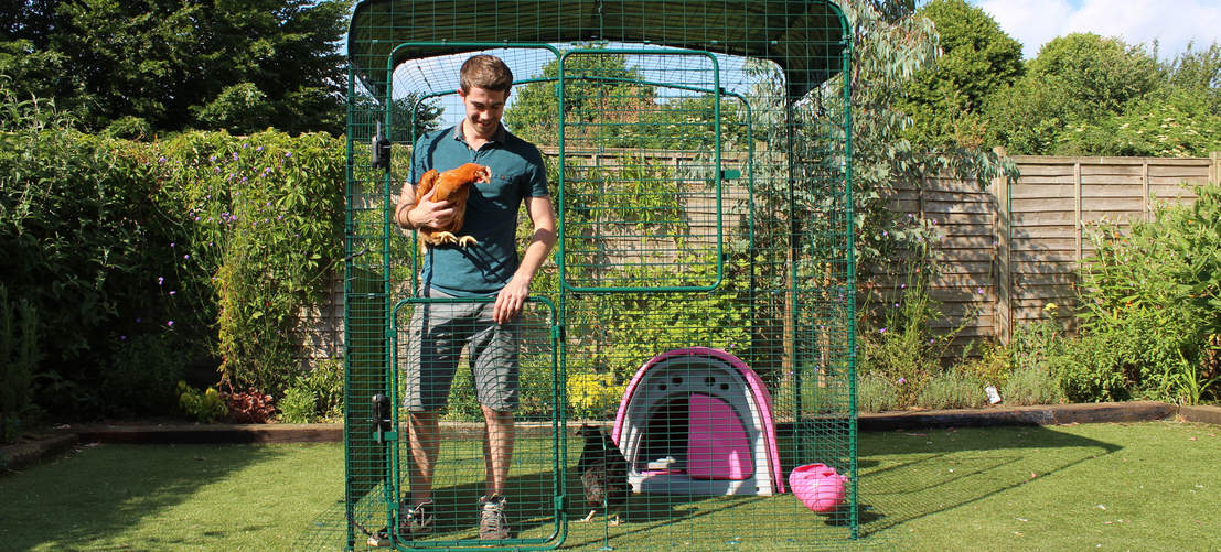 6ft x 6ft x 6ft Walk in Chicken Run - Eglu Classic Chicken Coop inside and man holding chicken in stable door