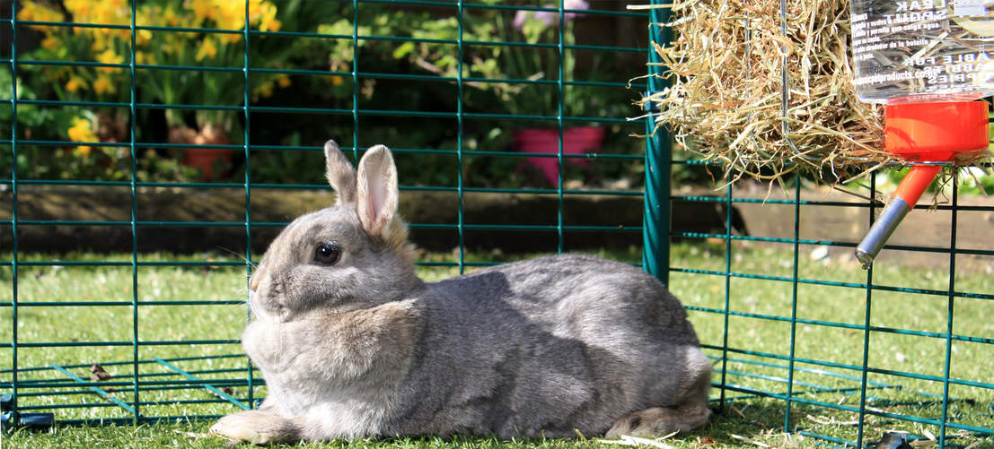 Rabbits big and small will love playing and relaxing in the large outdoor rabbit run
