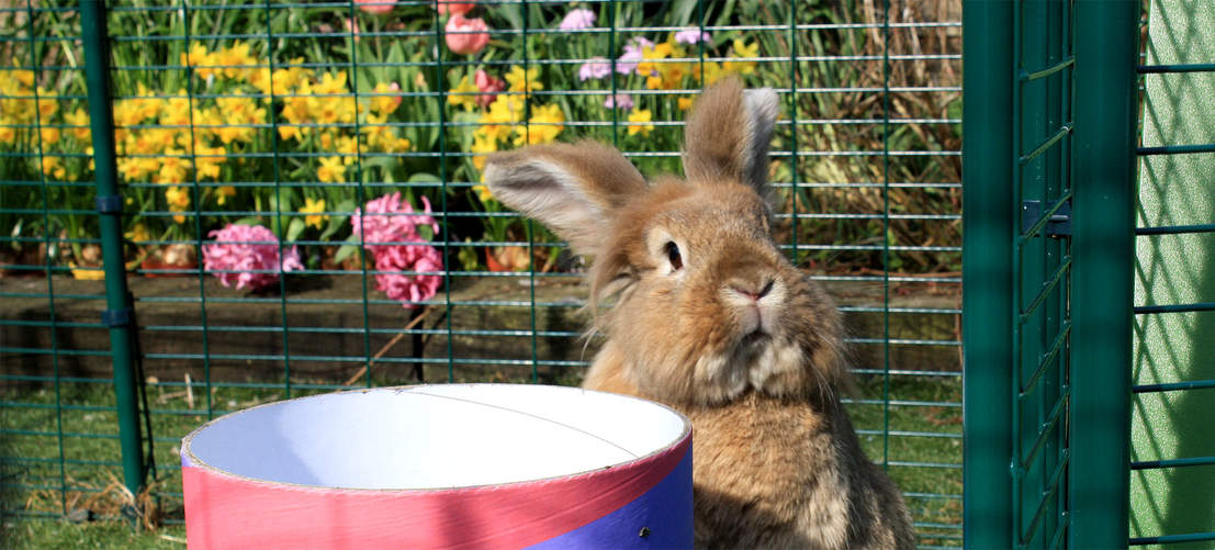 The Outdoor Rabbit Run is designed to keep all breeds and sizes of rabbit safe from predators such as foxes and coyotes