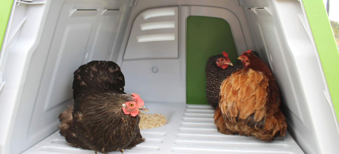 The Eglu Go UP, with comfortable roosting bars and nest box, is suitable for up to 4 medium sized hens.