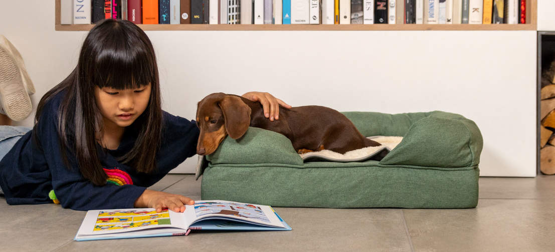 Adding the blanket to their bed or favourite spot will create a cosy and calming space for your dog.