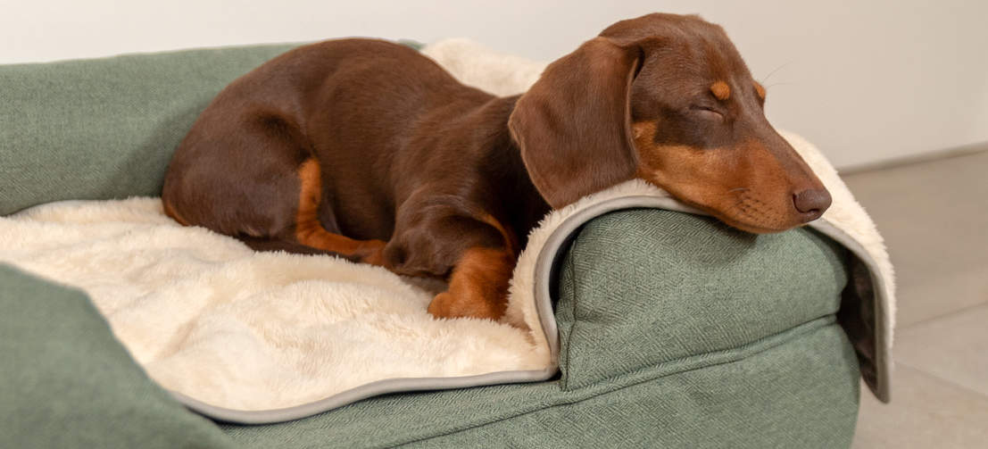 Your dog will enjoy a relaxed, deep sleep with the Luxury Super Soft Dog Blanket.