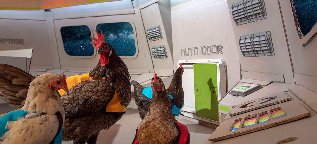 Lay long and prosper! The future of chicken keeping has arrived!