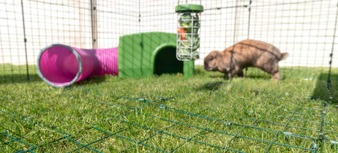 Choose a Zippi run with enclosed roof and underfloor mesh so your pet can exercise and play safely all day.