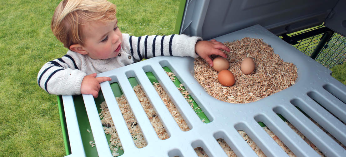 Your chickens will love the smooth roosting bars and integrated nest box, and collecting fresh eggs in the morning has never been easier.