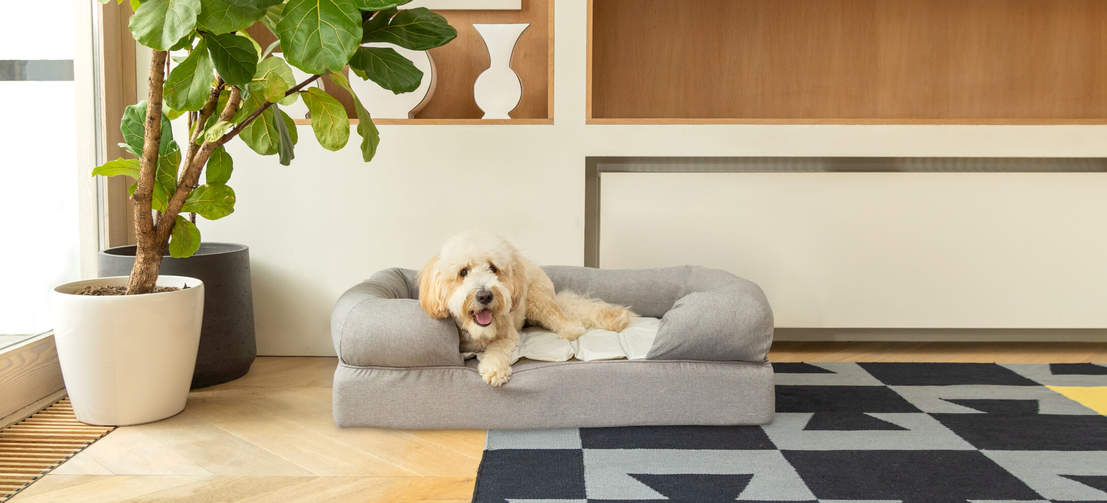 The self-cooling mat will keep your pet cool for several hours, reducing the risk of heatstroke after exercise.