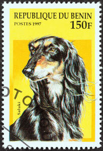 An Afghan Hound on a West African stamp