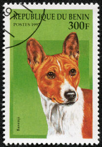 A Basenji on a West African stamp 2