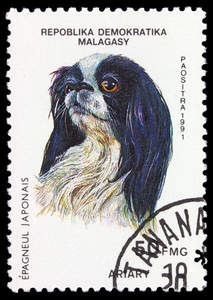 A Japanese Chin on a Madagascan stamp