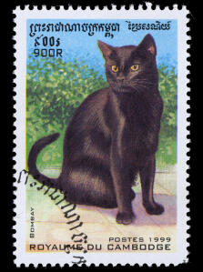 a stamp of a bombay cat from cambodia