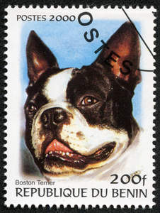 A Boston Terrier on a West African stamp