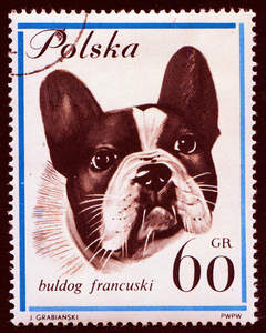 A French Bulldog on a Polish stamp