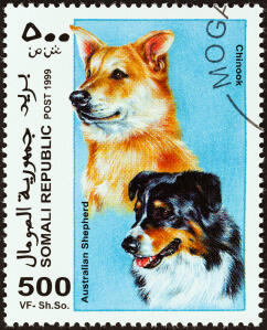An Australian Shepherd Dog and a Chinook on a African stamp