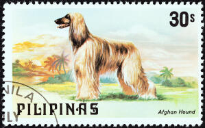 An Afghan Hound on a Philippine stamp