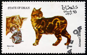stamp from the state of Oman with a Manx cat on it