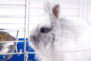 A close up of an Angora rabbit wonderful bark eyes