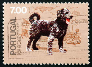 A stamp of a Portuguese Water Dog
