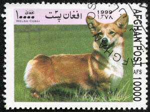 A Cardigan Welsh Corgi on an Afghan stamp