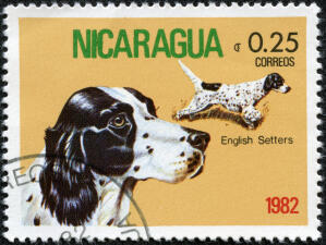 An English Setter on a Central American stamp