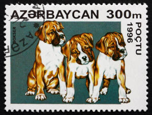 A Boxer on an Eastern European stamp
